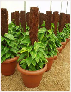 Benefits Of Coco Coir, Uses Of Cocopeat, Coco Coir ...